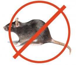 Уничтожение грызунов, крыс и мышей в Ставрополе