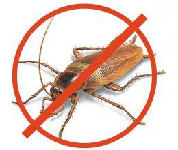 Уничтожение насекомых, тараканов и клопов в Ставрополе